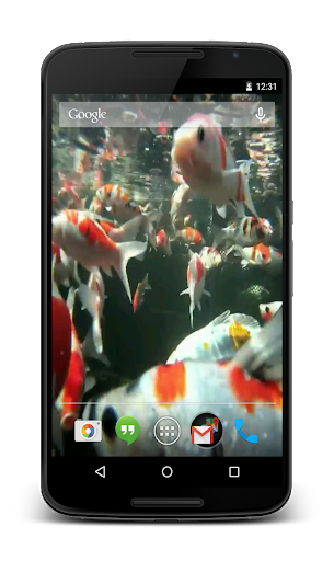 Koi HD Video Live Wallpaper