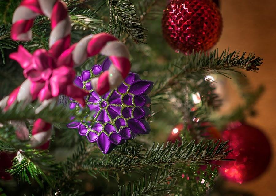 Purple Ornament by Matt Reynolds - Public Holidays Christmas
