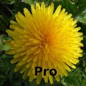 Alaska's Wild Flowers Pro icon