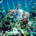 Sea Turtle Live Wallpaper