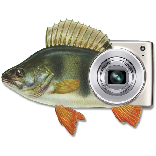 MP钓鱼照片的Widget 生活 App LOGO-APP試玩