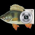 MP钓鱼照片的Widget icon