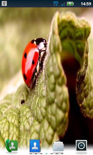 Color Lady Bug LWP Pro