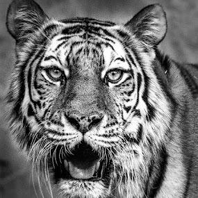 T-BW by Lou Plummer - Black & White Animals (  )