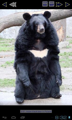 熊高清壁紙