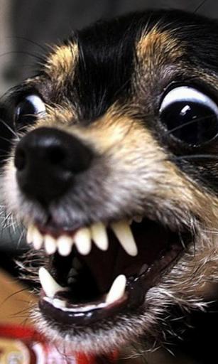 Psycho dog Live Wallpaper