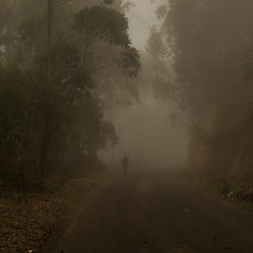 Figure in the Mist by Georgia Darlow - Landscapes Forests ( silhouette, forest, india, kerala, munnar, mist )