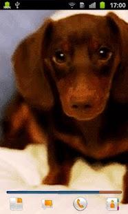 Puppy Live Wallpaper  Screenshots