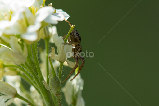 Spider on white flower insects spiders animals pixoto spider on white flower by istvan fazakas animals insects spiders blurred green mightylinksfo