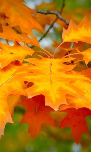 秋天动机1壁纸