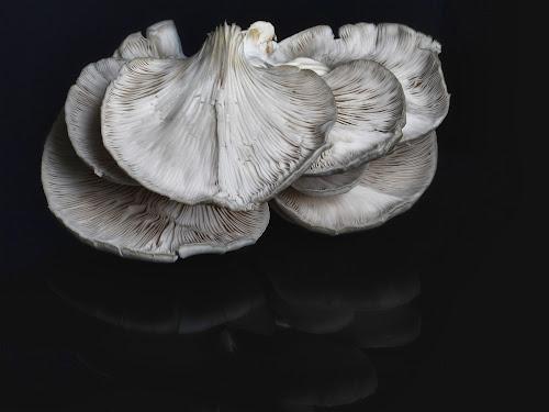 Mushroom by Cristobal Garciaferro Rubio - Nature Up Close Mushrooms & Fungi