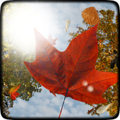 Falling Leaves Free Wallpaper