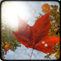 Falling Leaves Free Wallpaper 1.4