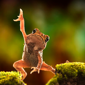 Dancing by Aditya Permana - Animals Amphibians ( , color, colors, landscape, portrait, object, filter forge )
