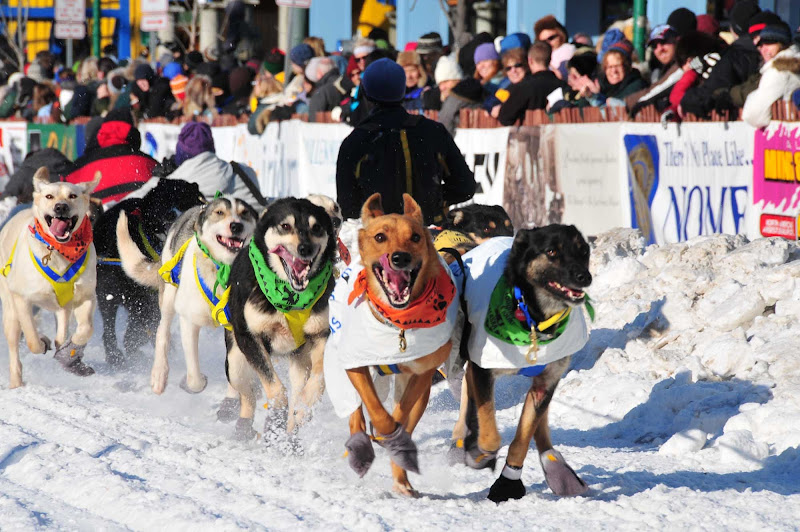 The start of the Iditarod in Anchorage. A person who drives a dog sled team is called a musher.
