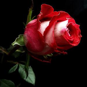 20141118_142100_Richtone(HDR).jpg