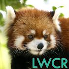 panda rojo lwp icon