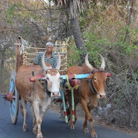 Oldest Transportation Mode by Rushi Chitre - Transportation Other