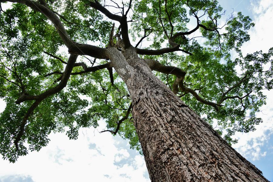 Ipê - Itapura SP by Marcello Toldi - Nature Up Close Trees & Bushes