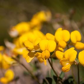 Blomst by Tommy Johansen - Flowers Flowers in the Wild ( macro, nature, flower )