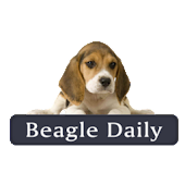 Beagle Daily