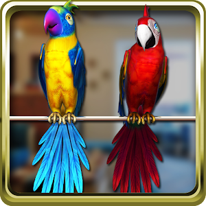 Talking parrot couple free android apps on google play