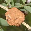 Wasp's pot