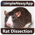Rat Dissection for tablet icon