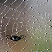 Creepy Spider e-Bobblehead