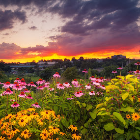 Flowers at Sunset by Jeff Klein - Flowers Flowers in the Wild ( clouds, sky, park, sunset, night, landscape, flowers )