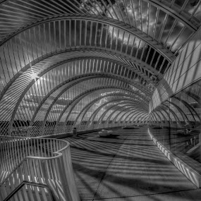 Reflections by Bill Camarota - Buildings & Architecture Public & Historical ( modern, university, monochrome, florida, polytechnic, campus )