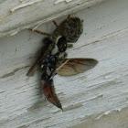 Araña comiendo otro Insecto