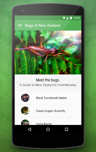 Bugs of New Zealand Free