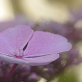 by Kathelijn Vlaemynck - Flowers Flower Gardens