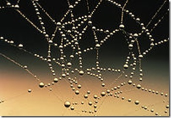 200px-Water_drops_on_spider_web