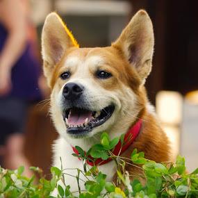 Un retrato de Rocky :) ! by Gabriel Cabrera - Animals - Dogs Portraits
