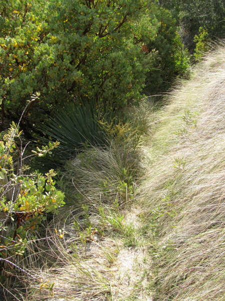 Recently well watered grasses hang over the trail.