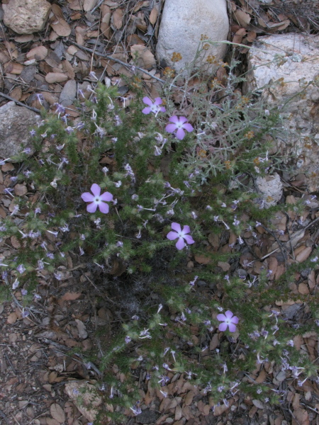 Some little purple flowers.