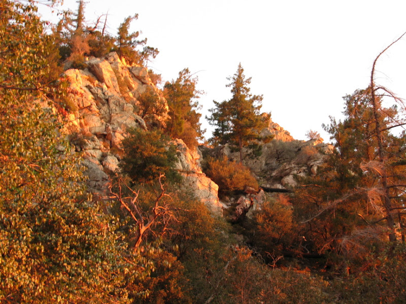 Trees and rocks colored by the sunset light.