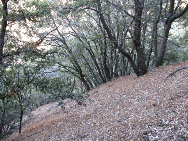 Slope with shrubs along the trail route.