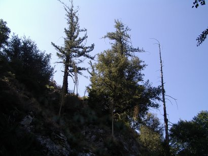 trees along the top of the canyon wall