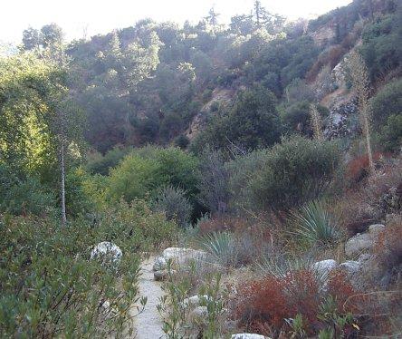 deserty trail