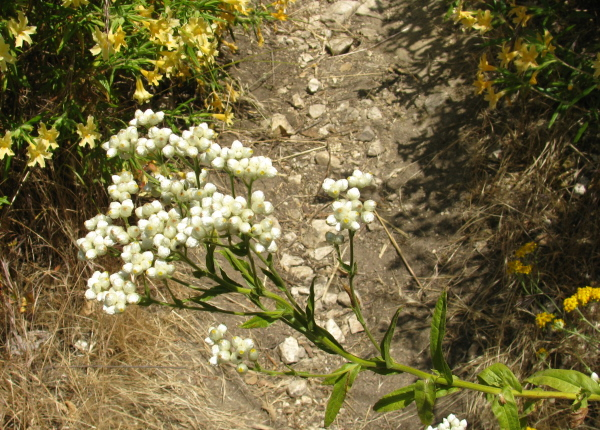 different funny white flowers