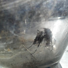 Black wasp?