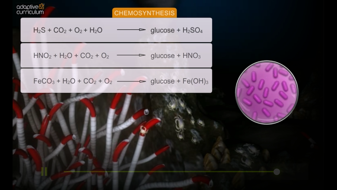 chemosynthesis and bacteria Chemosynthesis occurs in differences and similarities between chemosynthesis and this is a process in which bacteria derives energy from the oxidation.