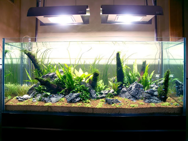 Porady akwarystyka - ryba akwariowa