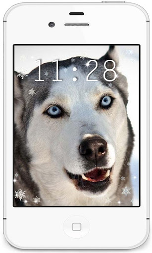 Husky Winter live wallpaper