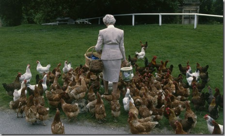 The-duchess-with-her-chicks