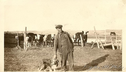 Cattle and Man and Dog