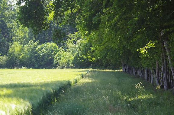 Céréaliculture et forêt. Hautes-Lisières (Rouvres, 28), 3 juin 2010. Photo : J.-M. Gayman